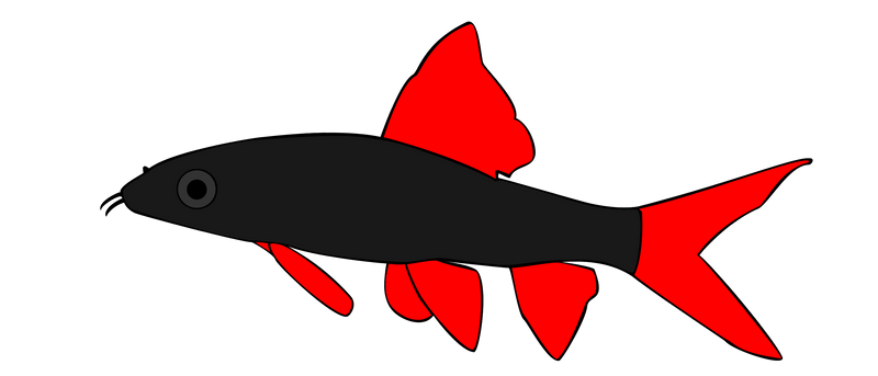 Rainbow Shark Drawing Rainbow Shark by Ccisnex