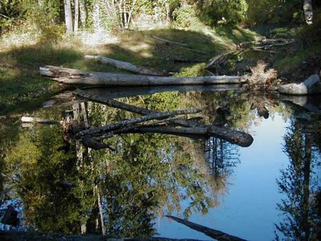 the corner pond