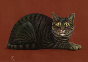 Macan - The Cat