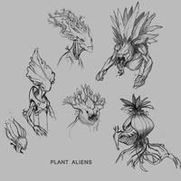 Pollops Sketches