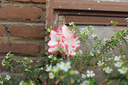 Garden#6