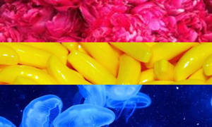 Aesthetic Pansexual Flag