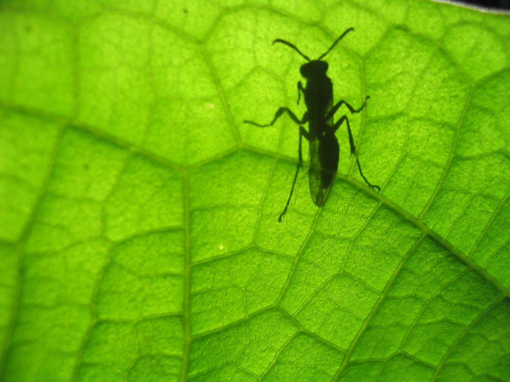 Bug Life by metdude