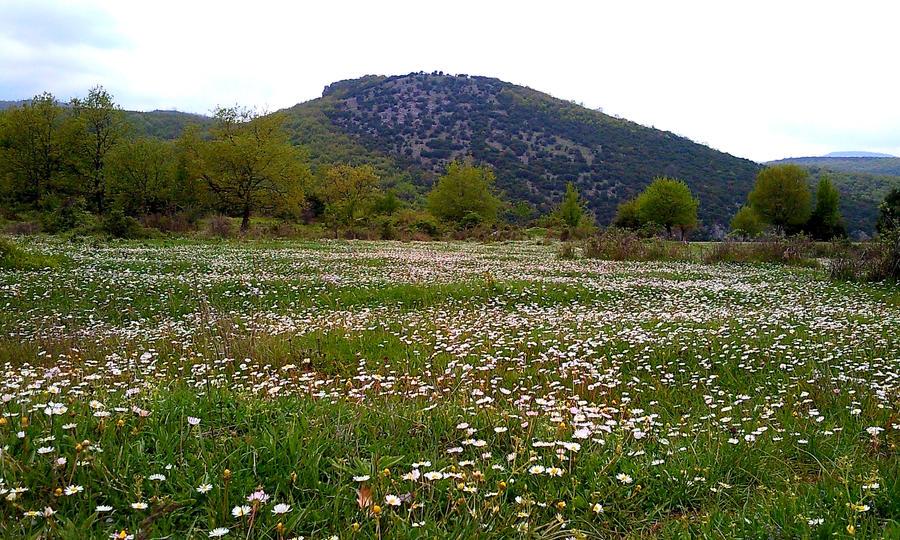 landscape by ArisAnthopoulos