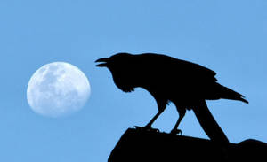 Black Raven and moon by heartyfisher