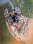 Dog pastel art