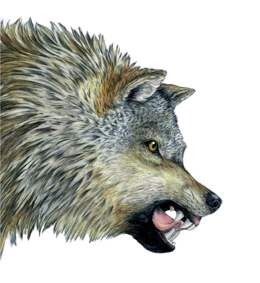 Angry Wolf by moosepaw on DeviantArt