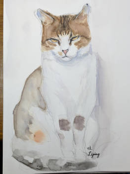 A Serious Cat