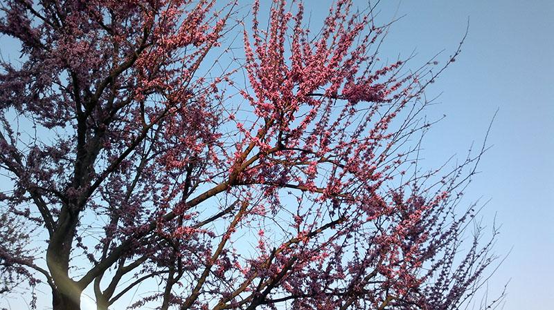 Spring by francy84
