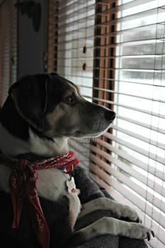 Watching Something 3
