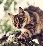 tree climber.