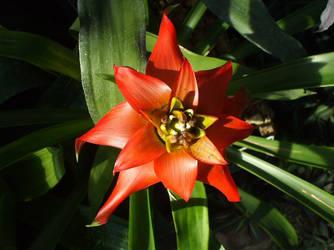 Plant 57 by chocolatesa