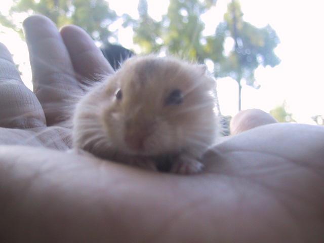 A Hamster by kean