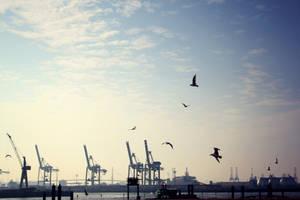 Hamburg Seagulls by Mischah