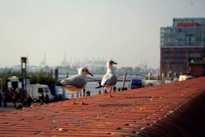 Seagulls by Mischah