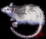 A Simple Rat