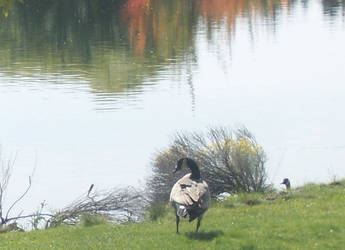 Geese1 by MamaMiaLiz