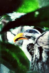 bird in the zoo