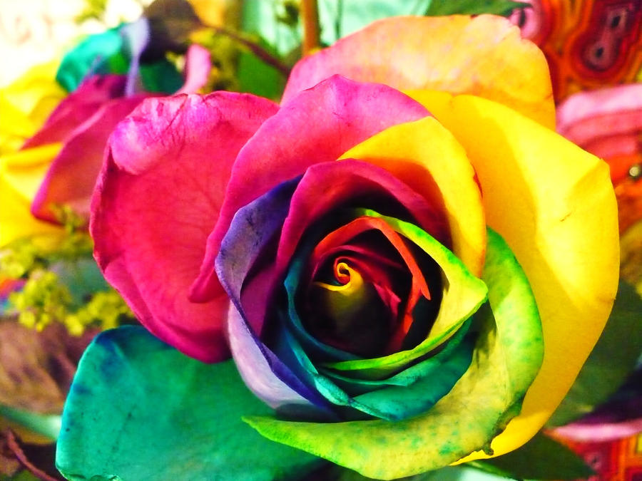 Rainbow rose by writeitdown2908 on deviantart for Where to buy rainbow roses