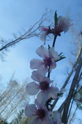 Almond to the Sky by keiji-sakamura