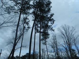 Trees amidst a stormy sky by keiji-sakamura