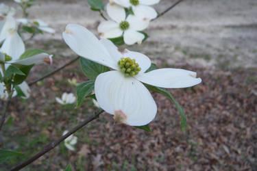 Spring Bloom by keiji-sakamura