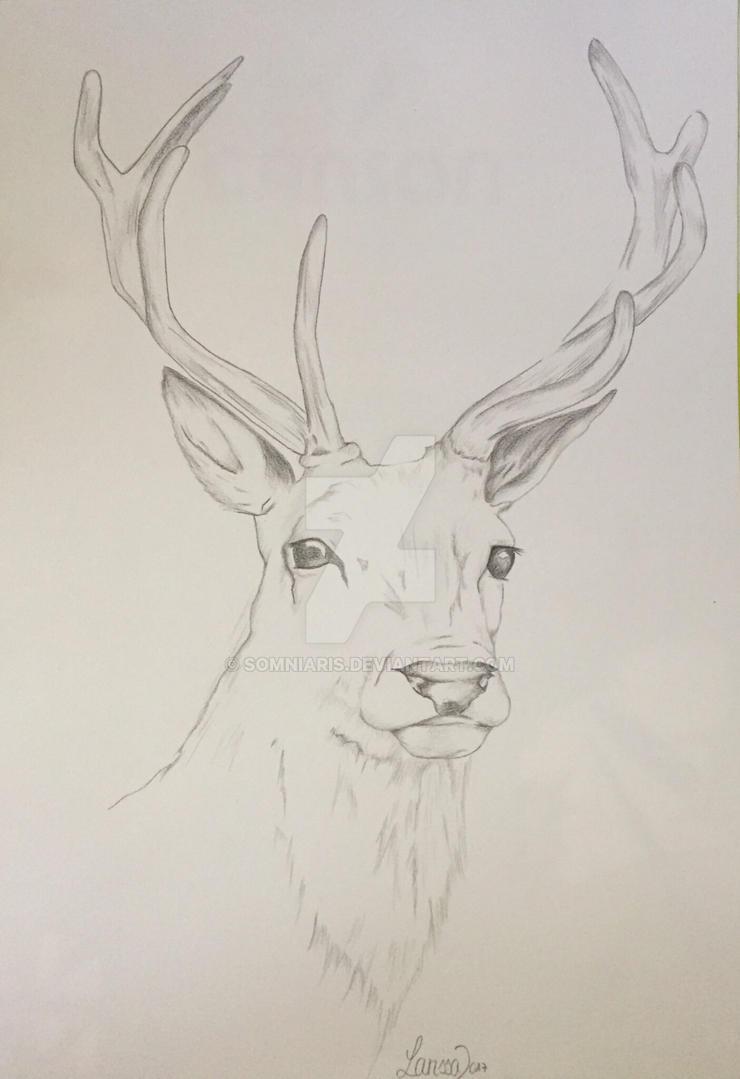 Deer Drawing || Traditional Art by Somniaris