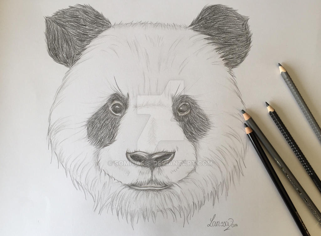 Cute Panda || Traditional Art by Somniaris