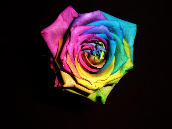 True Colours .........