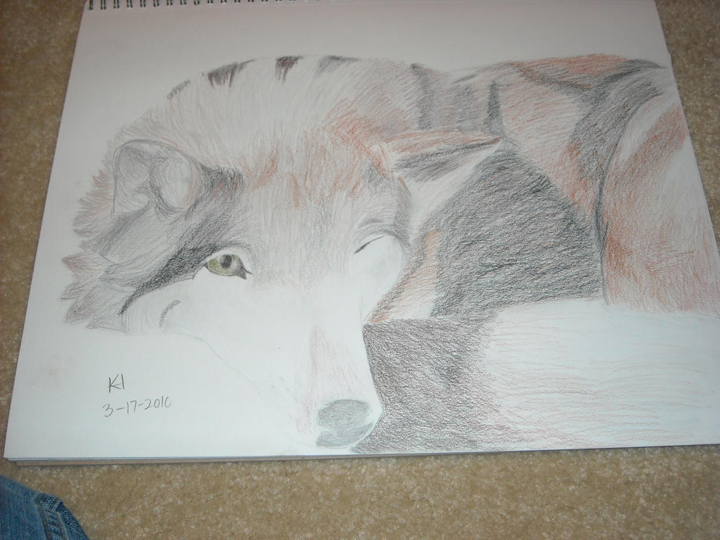 Wolf drawing by dragonwing71