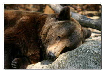 Come'n'Play with Teddy Bear