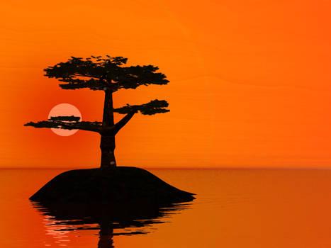 Pine Sunset 1