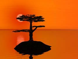 Pine Sunset 2