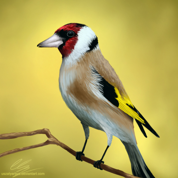 Goldfinch by UszatyArbuz