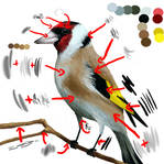 Bird - deconstruction