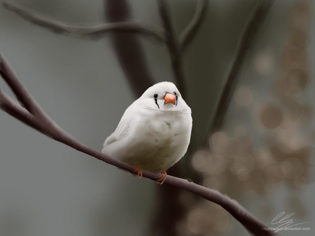 Finch (digital painting) by UszatyArbuz