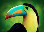 Profile of toucan
