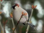 Early bud (digital illustration)