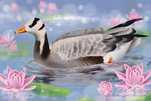 Bar-headed goose among the lilies by UszatyArbuz