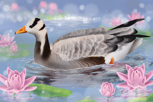 Bar-headed goose among the lilies