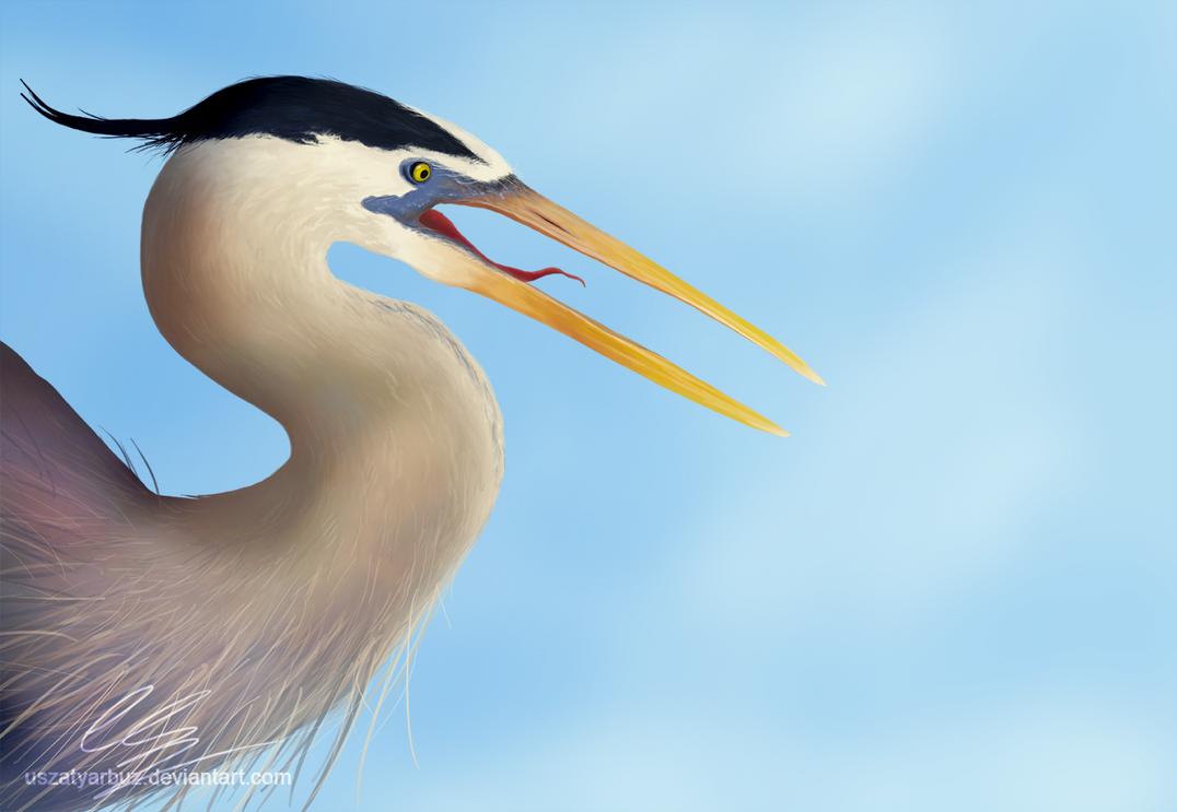 The great blue heron by UszatyArbuz