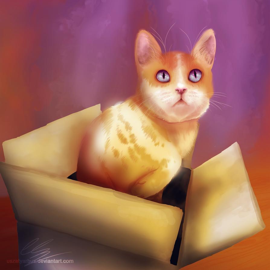 Orange in a box by UszatyArbuz