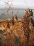 Grass by Whatangel