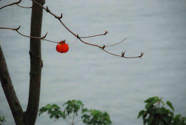 Loney leaf
