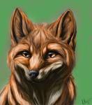 Fox Realism