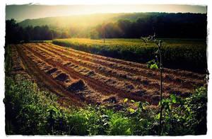 Fields of Sun by Singularity4