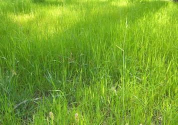 Field of Green by DavisJes