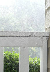 Spiderweb in the rain by DavisJes
