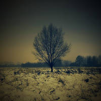winter solstice the leafless by robotwithatightass