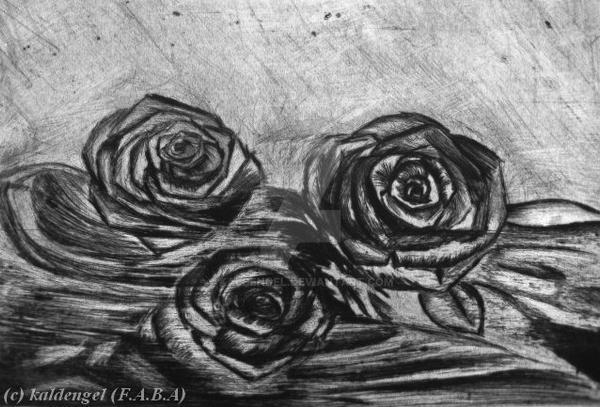 Roses by kaldengel